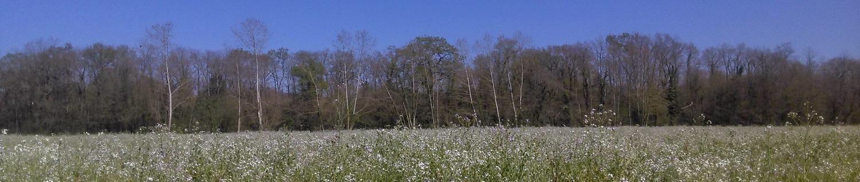 Couvert au printemps