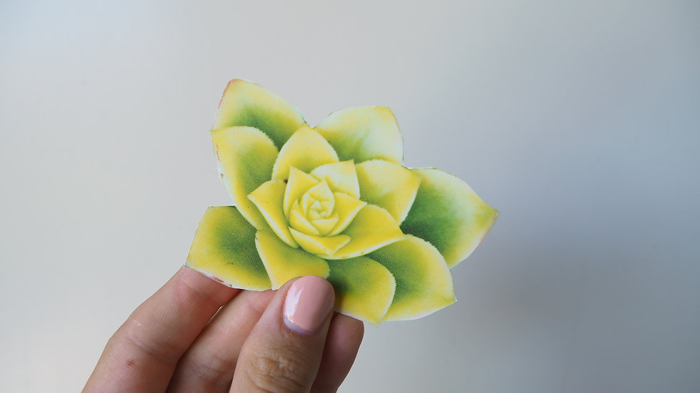 Succulent Sticky