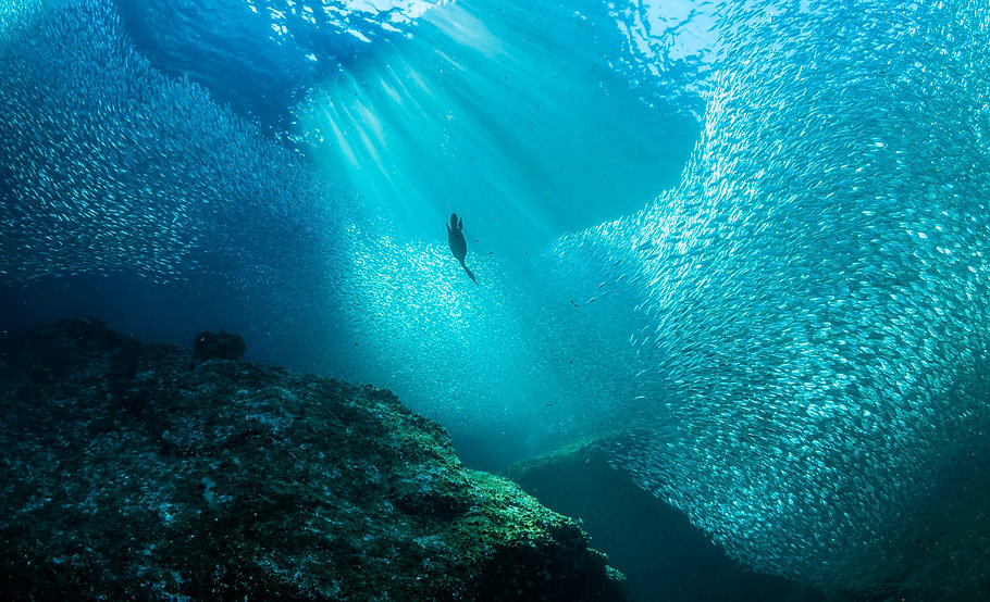 diving-into-bait-fish-571935385-5724c99b