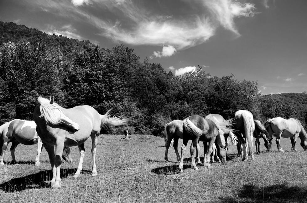 cavalli03.jpg