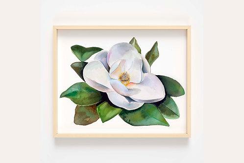 Magnolia #1 Print