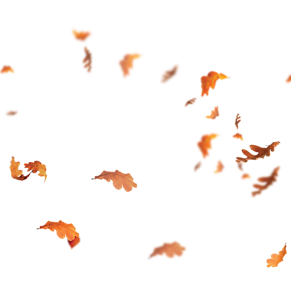 DaysofFall_leaves.png