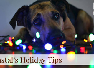 Coastal's Holiday Tips! Day 7