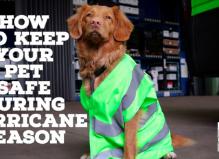 How To Keep Your Pet Safe During Hurricane Season