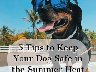 5 Tips to Keep Your Dog Safe in the Summer Heat
