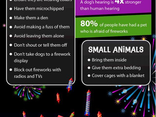 Fireworks Safety for Pets