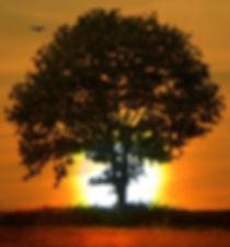 mindful sun tree 2_crop.jpg