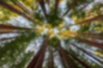 compressed trees.jpg
