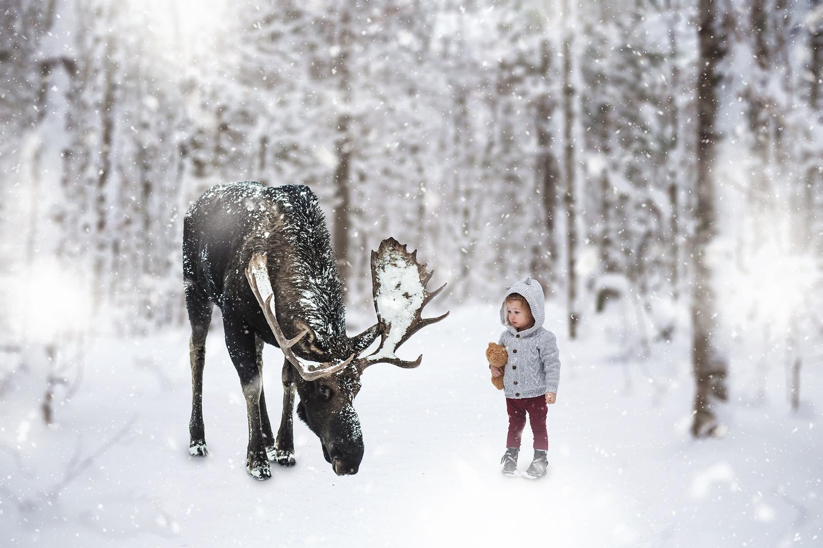 girl watches as moose feeds muskoka