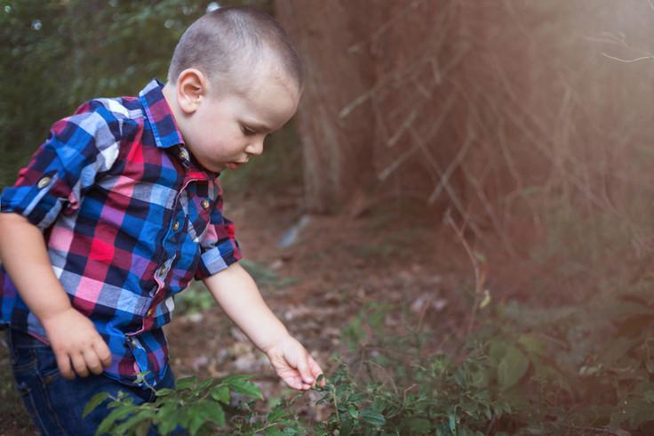 blueberry picking wild muskoka