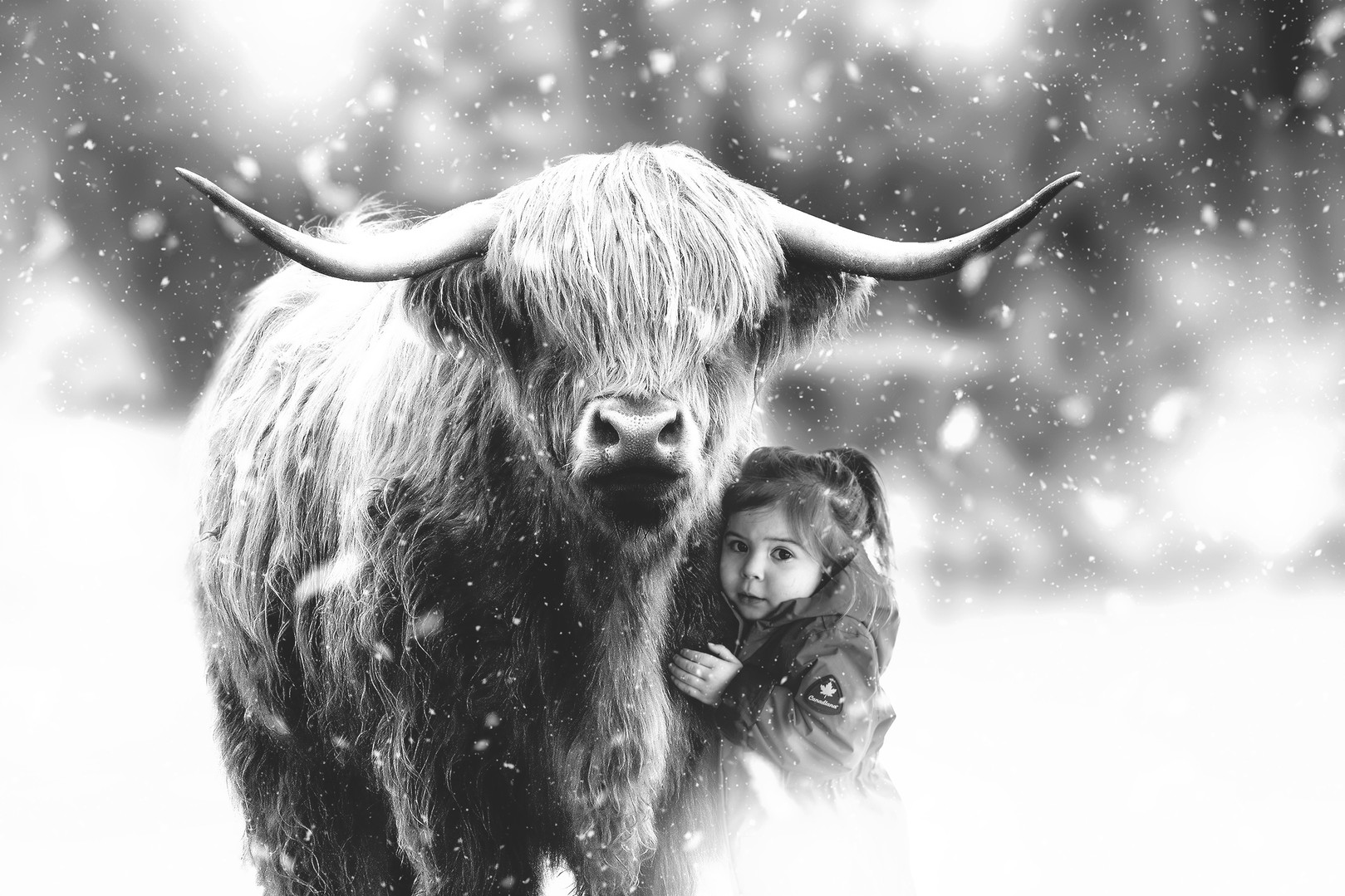 muskoka winter digital painting bull and girl cuddle