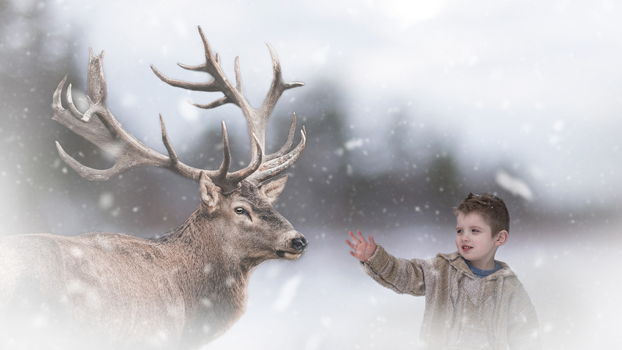 deer and boy winter snowing muskoka