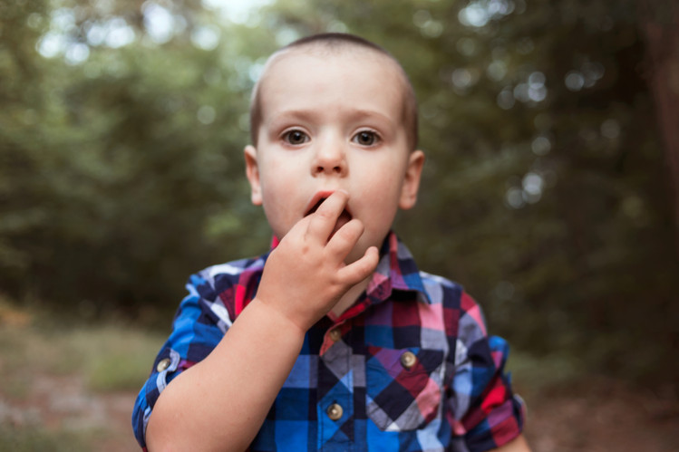 child pick wild blueberried in Muskoka documentary photo