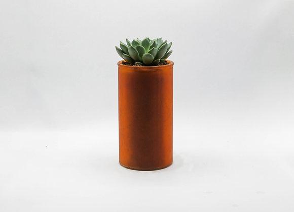 D&M Orchidpot with Succulent
