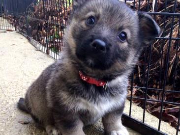 Precious Little