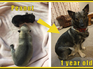 Happy birthday Peanut and her brothers