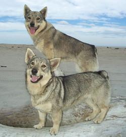 Possum & Pippy