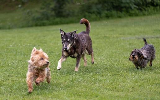 Stages lecture des comportements canins | Paulina DRURI
