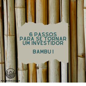 """O que o investidor tem a aprender com o """"bambu"""""""