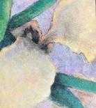 """""""Yellow Iris"""""""