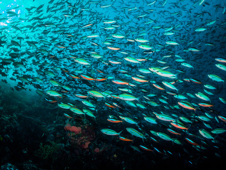 How will climate change affect fish in the future?