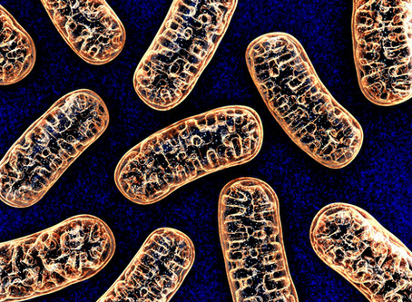 Defects in mitochondrial proteins can cause neuropathies