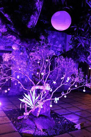 Mango tree with lights