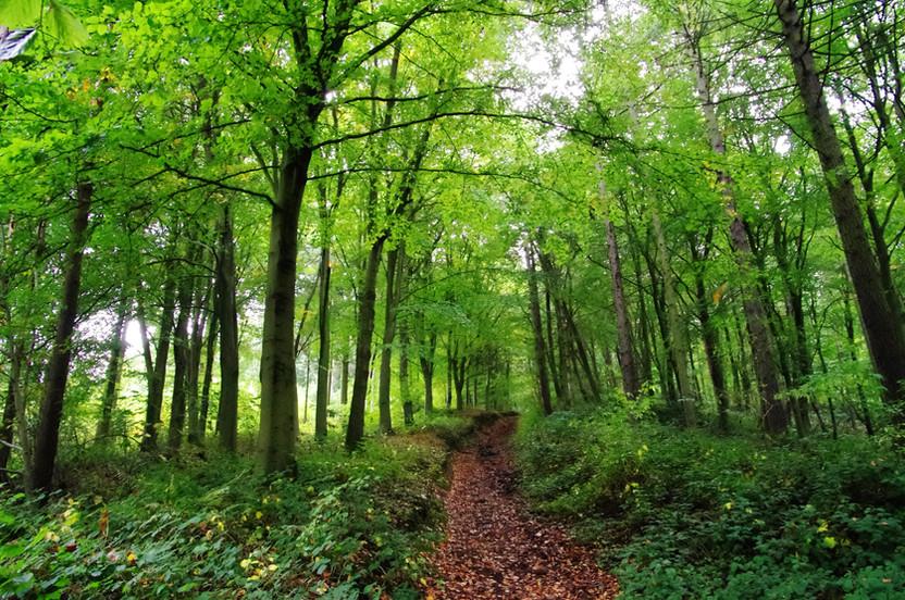 Woodbury Hill, Path