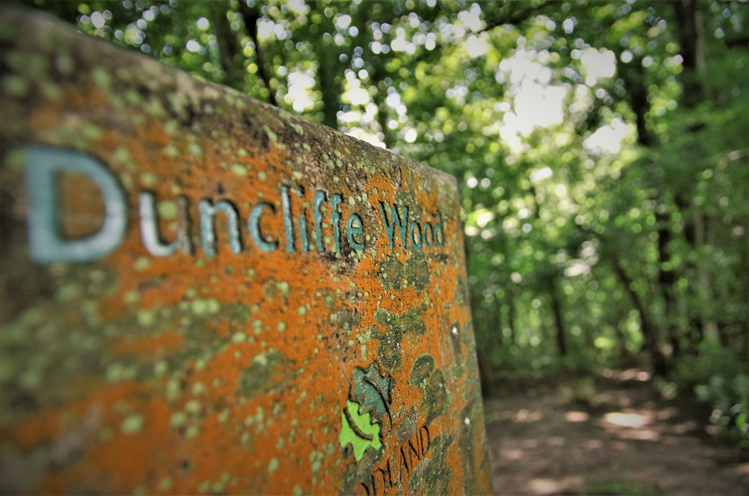 Duncliffe Wood