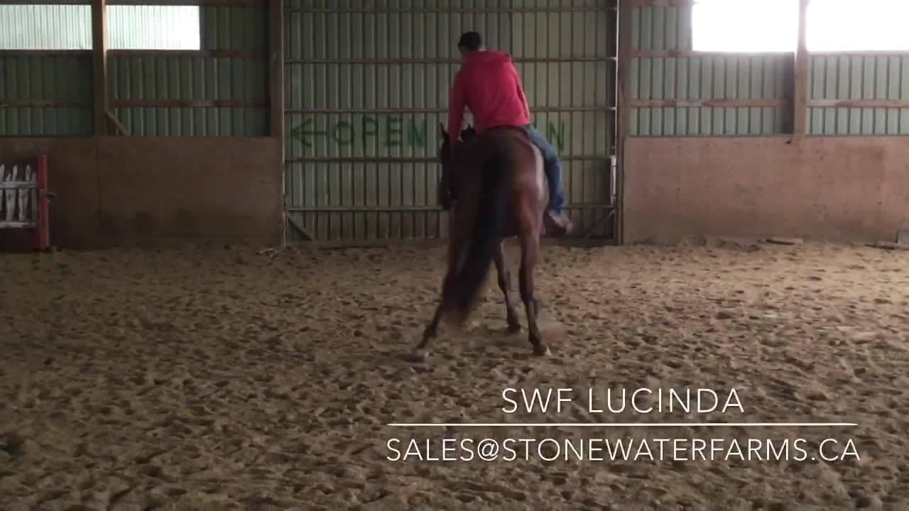 SWF Sale Horses