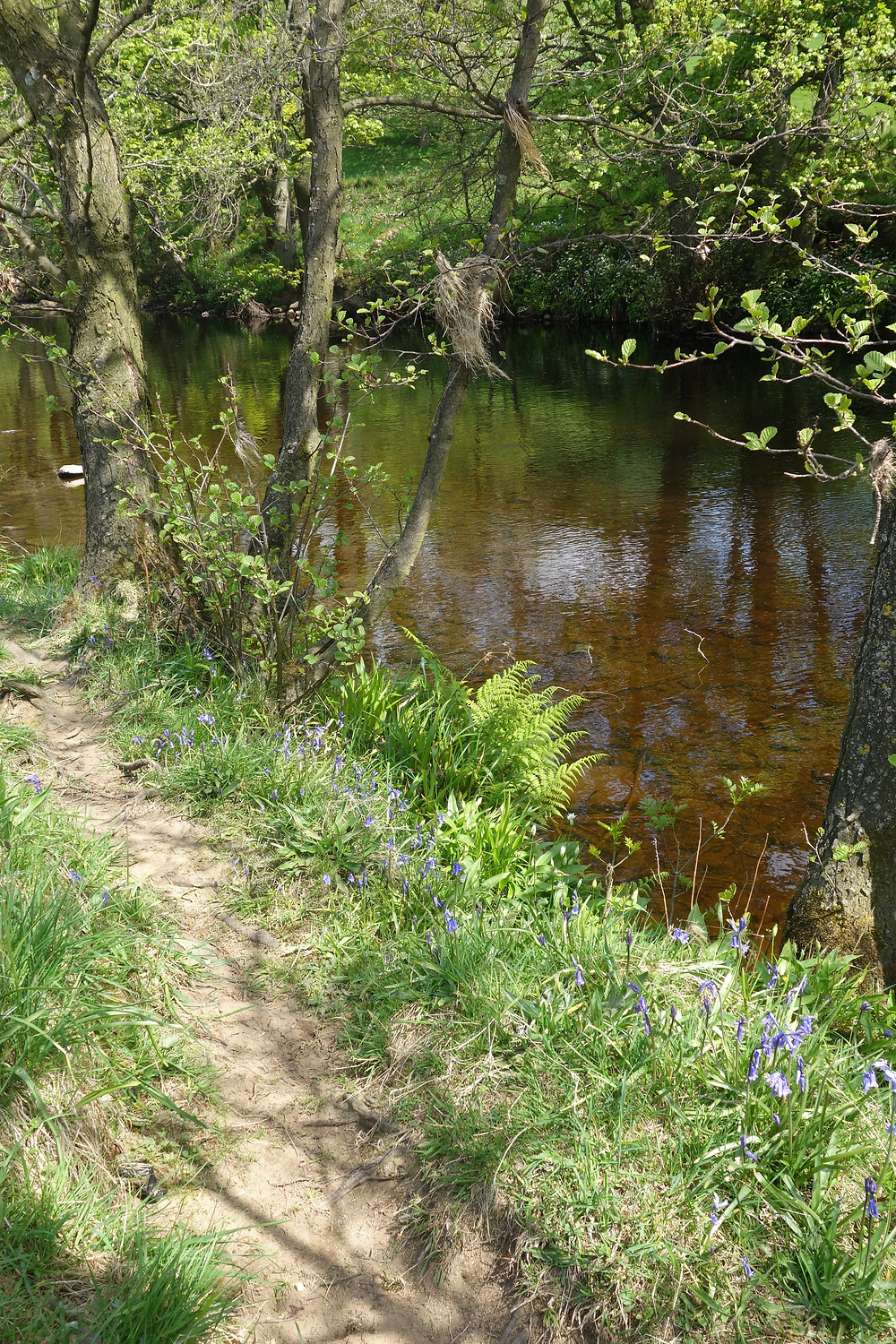 River at River View Pateley holiday accommodation
