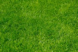 grass-2119587_1920.jpg