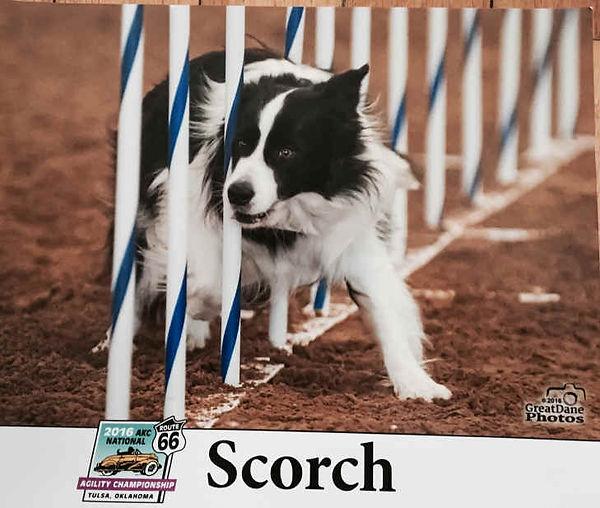 scorch3.jpg