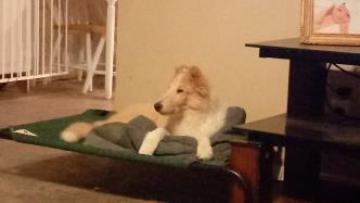 Garrett - puppy2.png