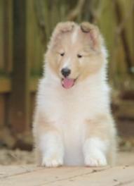 garret - puppy3.png