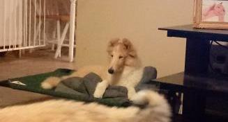 Garrett - puppy.png