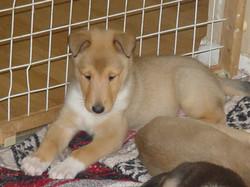 Penny-Bowen Puppies 035