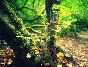 Breath Like Moss