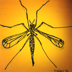 The Crane Fly