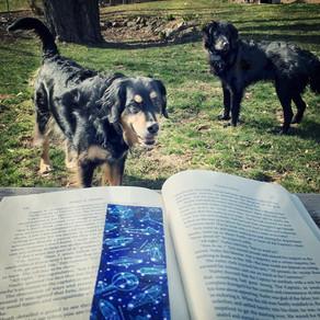 Reading Quest » 2018-04-20