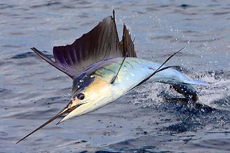 vacation fishing trip, all inclusive fishing trip, fishing ship, guatemala fishing charters