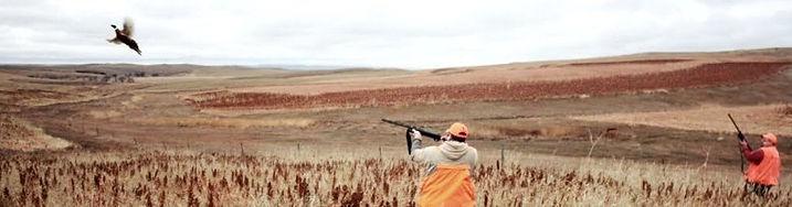 bird hunting, hunting vacation, ring necked pheasant hunting