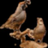 wild game, trophy quail