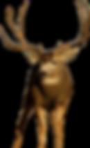 guided deer hunts, mule deer hunts, elk hunting outfitters
