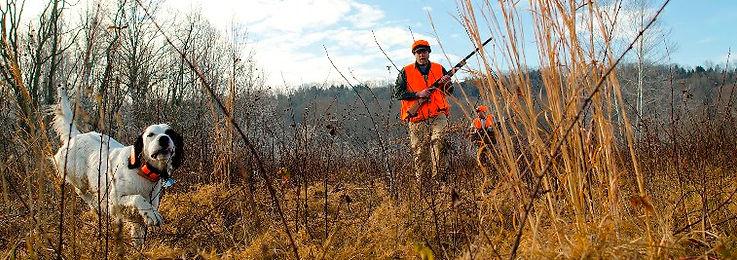 hunting trip packages, bird dog, bird hunts