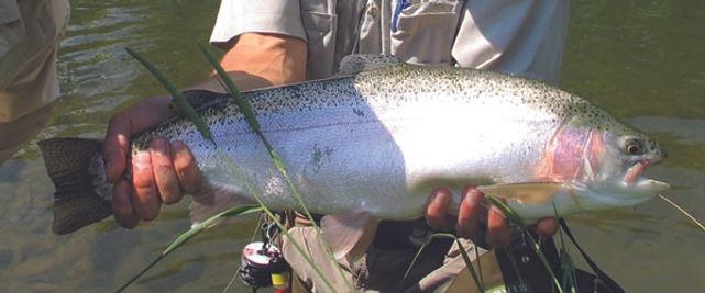salmon fishing trip, salmon fishing in british Columbia, Canadian fish