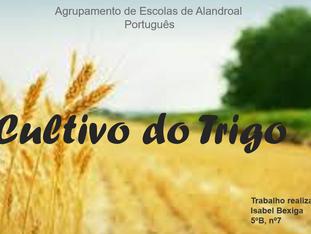 Momentos da vida de uma semente de trigo - A Vida Mágica da Sementinha de Alves Redol