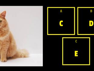 Alphabet sounds - Sons do alfabeto - Currícula Scolae