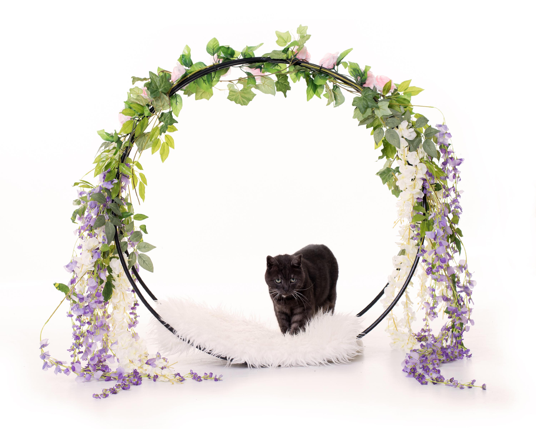 Pet Photography Studio Northants