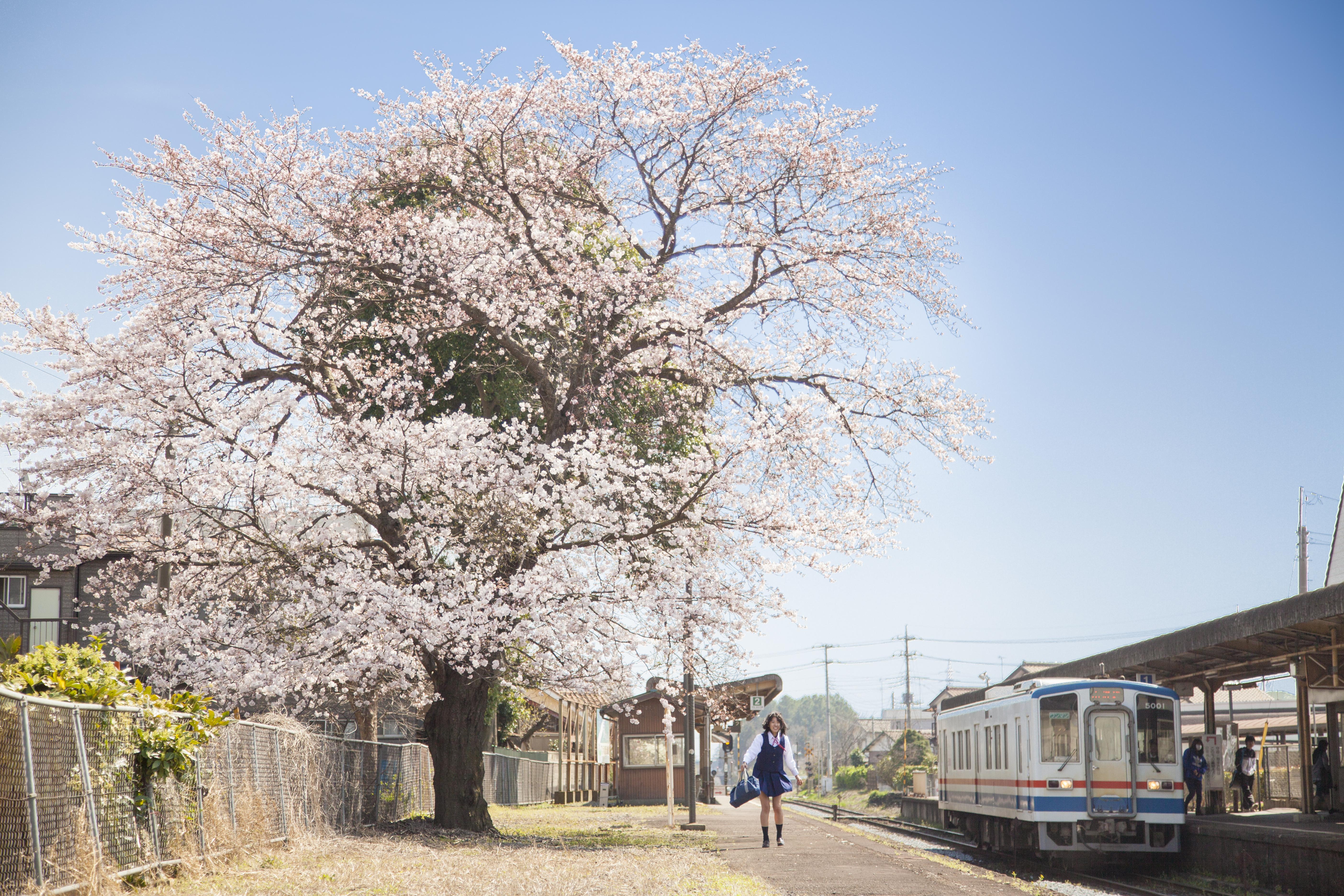 つくばみらい市 茨城県 Tsukubamirai, Ibaraki Prefecture
